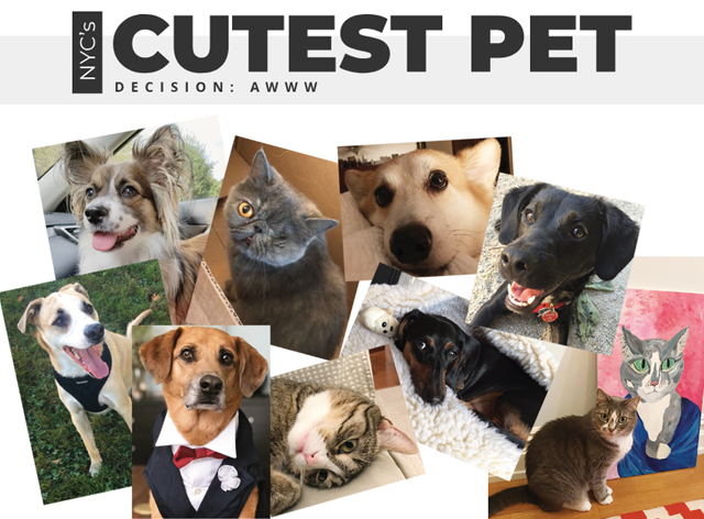 Decision: AWWW--Introducing 'NYC's Cutest Pet' Competition!