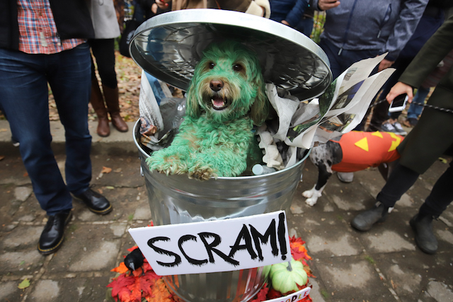 Photos: Which Dog Was The Best Dog At The Great PUPkin Halloween Dog Parade?
