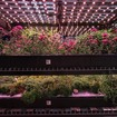 Inside The Incredible Underground Garden That Grows Greens & Herbs For NYC Restaurants