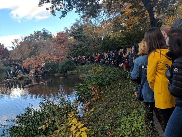 People Are Lining Up To See The Duck In Central Park