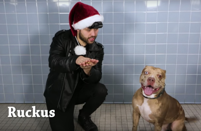 Watch NY Shelter Dogs Get Their Minds Blown By Magic Tricks