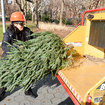 How To Recycle Your Christmas Tree In NYC