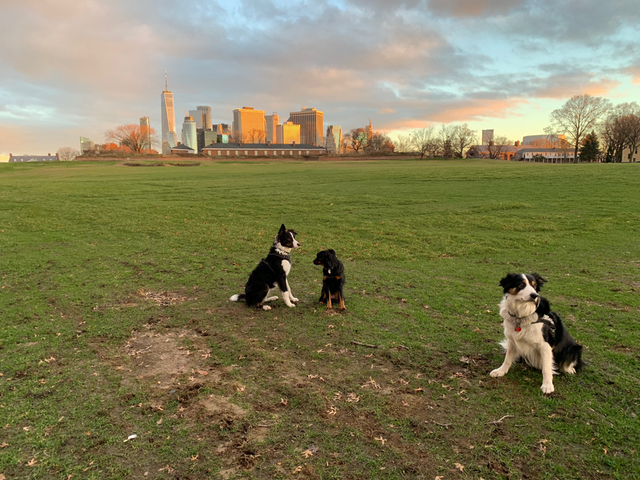 We Spent A Night With Governors Island's Working Dogs