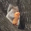 I Can't Stop Watching This NYC Squirrel Enjoying An Egg Roll