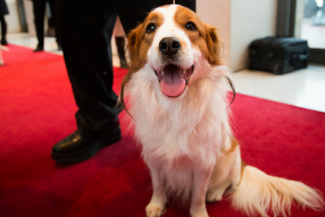 Photos: Meet The New Adorable Dog Breeds Coming To This Year's Westminster Dog Show
