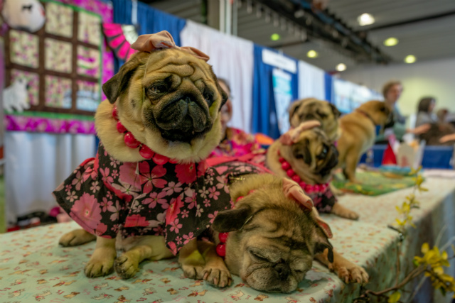 Photos: All The Best Dogs Showed Up For The Westminster Kennel Club Dog Show