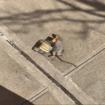 RIP Henny Rat