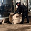 NYPD Undertake Special Mission To Rescue Concussed Hawk From Wall Street