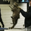 [Update] Freakin Raccoon Caught In 14th Street Subway Station