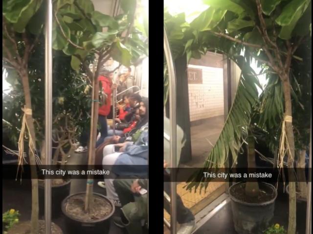 Video: Determined Man Transforms Subway Train Into Lush Rainforest