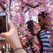 The Best Things To Do In NYC This Week: From Cherry Blossoms To Punk Rock Karaoke