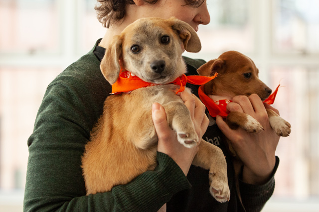 Meet Apple, Who Is Maybe Your New Dog And The 100,000th Animal The ASPCA Has Relocated