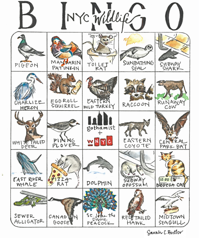 Play NYC Wildlife Bingo: How Many Of These Creatures Have You Spotted Around Town?