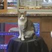Bodega Cat STOLEN From Sidewalk Outside Lexington Avenue Store