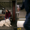 What Commuters With Service Dogs Want The Rest Of Us To Know