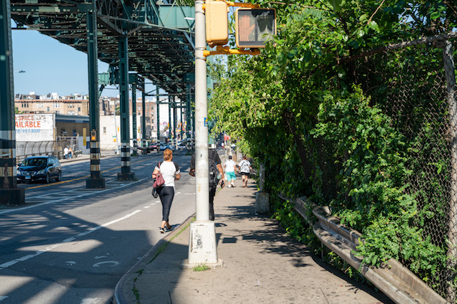 Photos: Poison Ivy From NYC Park Taking Over Public Sidewalk In The Bronx
