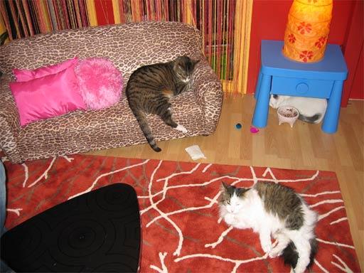 2006_06_meowcats.jpg