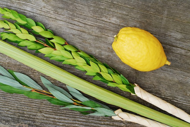lulav and etrog on a wood background