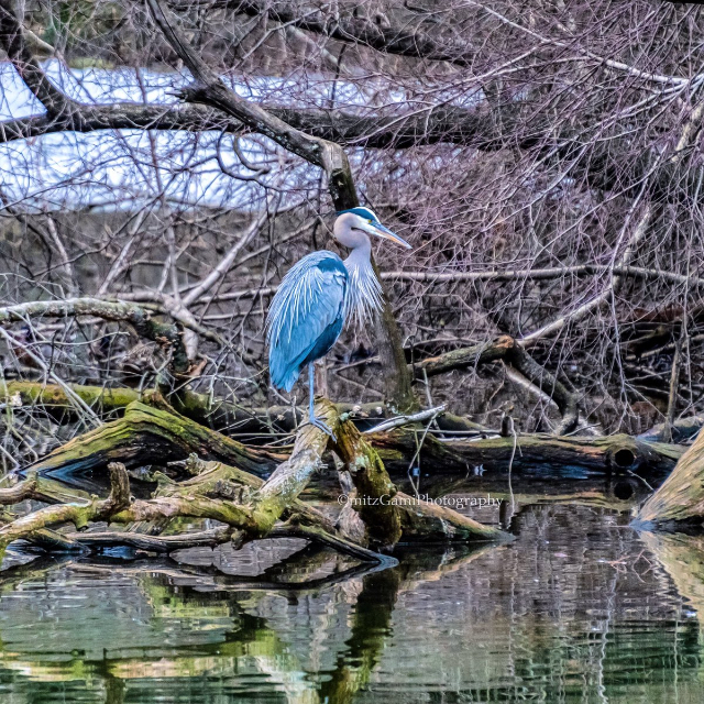 One Cool Thing: Move over Hot Duck, There's a New Heron in Town