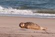 Reminder: Don't Take Selfies With Seals, OK?