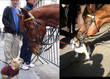 Videos: Watch Police Horses Lick Dogs To Celebrate Labor Day Weekend NYC Real Estate News image via Tigho