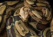 Anybody Want A Snake Massage?