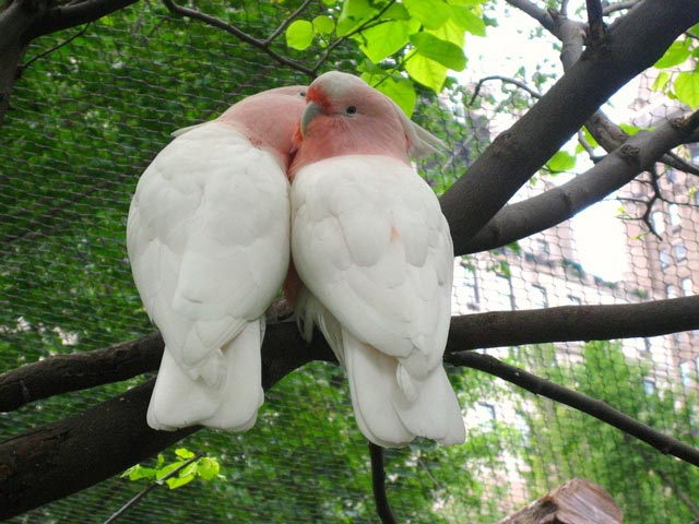 ���� ���� <<��� >> lovebirds.jpg