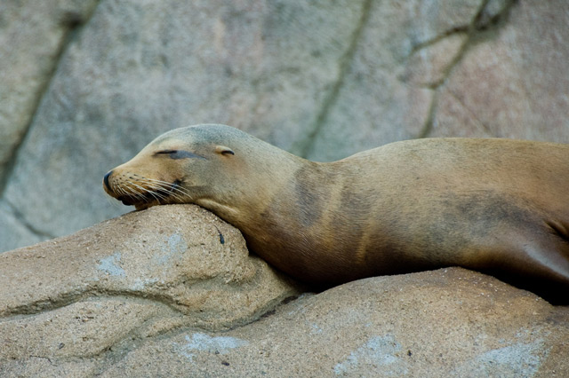 Sleepingseal