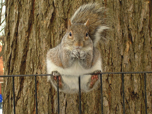 Snowysquirrel