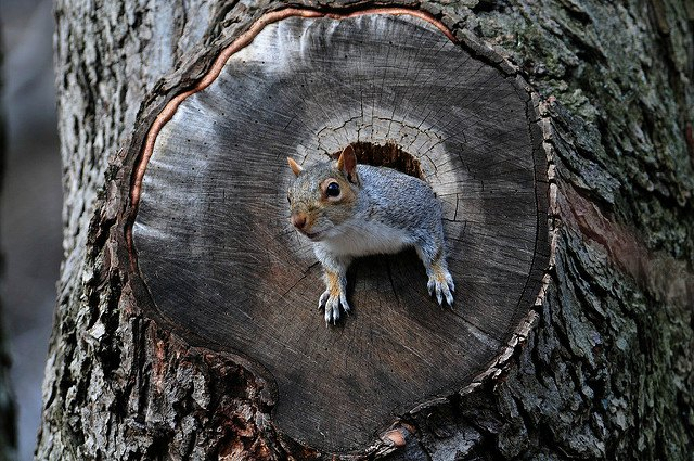 Warning about aggressive squirrel on attack in Prospect Park