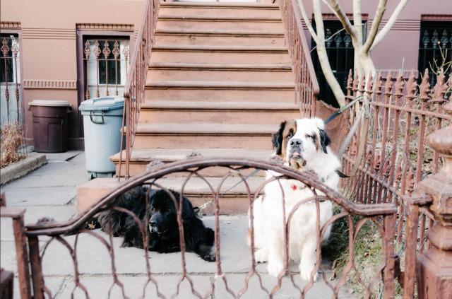 http://gothamist.com/attachments/nyc_davidcolon/080117bkdogs.jpg
