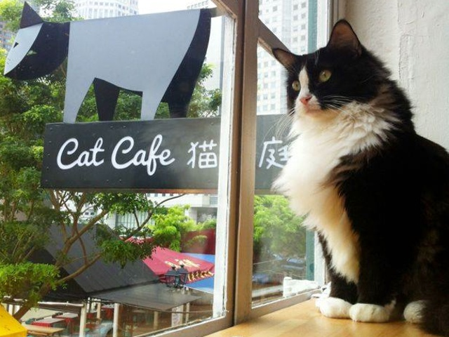 042114catcafe.jpg