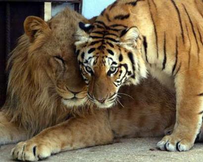 صور حيوانات جميله جدن