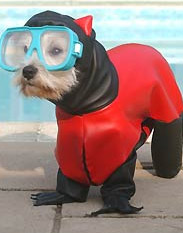 Hamish the Scuba Dog